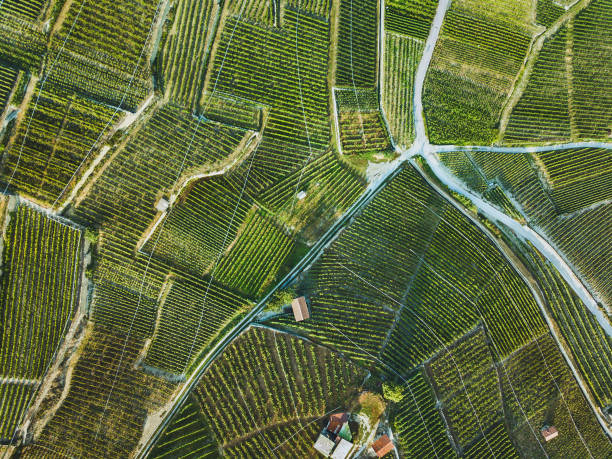 beautiful aerial landscape of wine yards stock photo