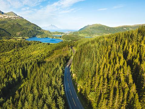 Vackra Flygfoto Över Asfalterad Väg I Skogen-foton och fler bilder på Asfalt