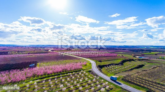 Beautiful aerial view of fruit trees in blossom springtime Lleida Catalonia Spain
