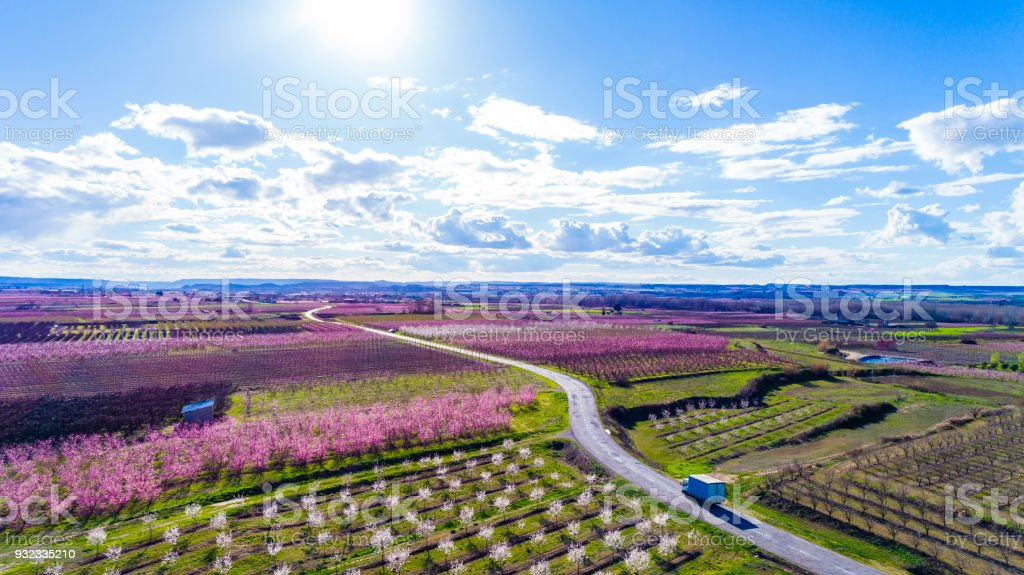 Beautiful aerial view of fruit trees in blossom springtime Lleida Catalonia Spain stock photo