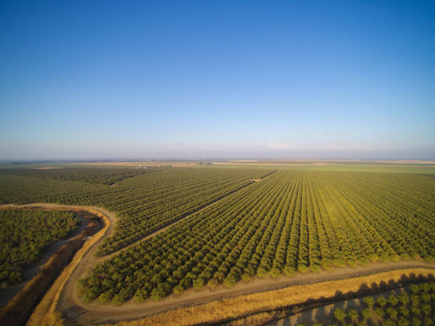 Beautiful aerial view of large almond orchard stock photo