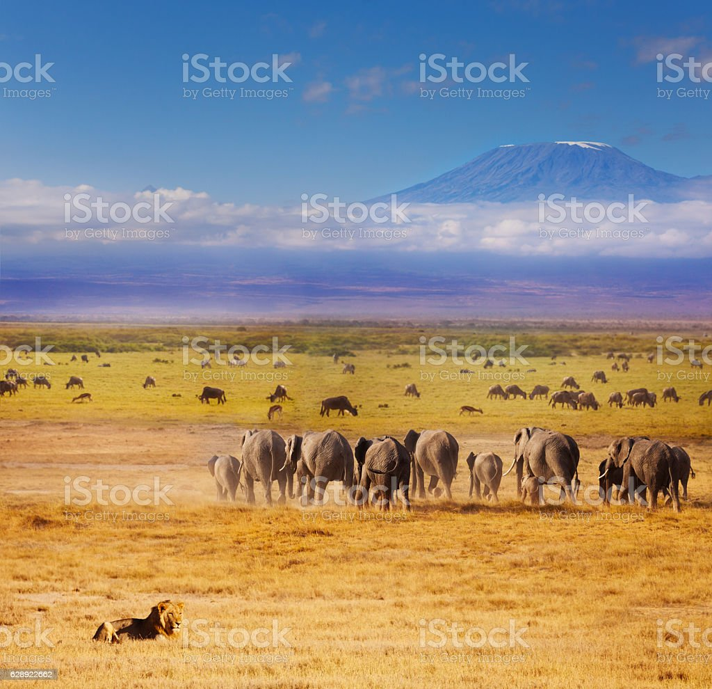 Beautiful African savannah during Great migration stock photo