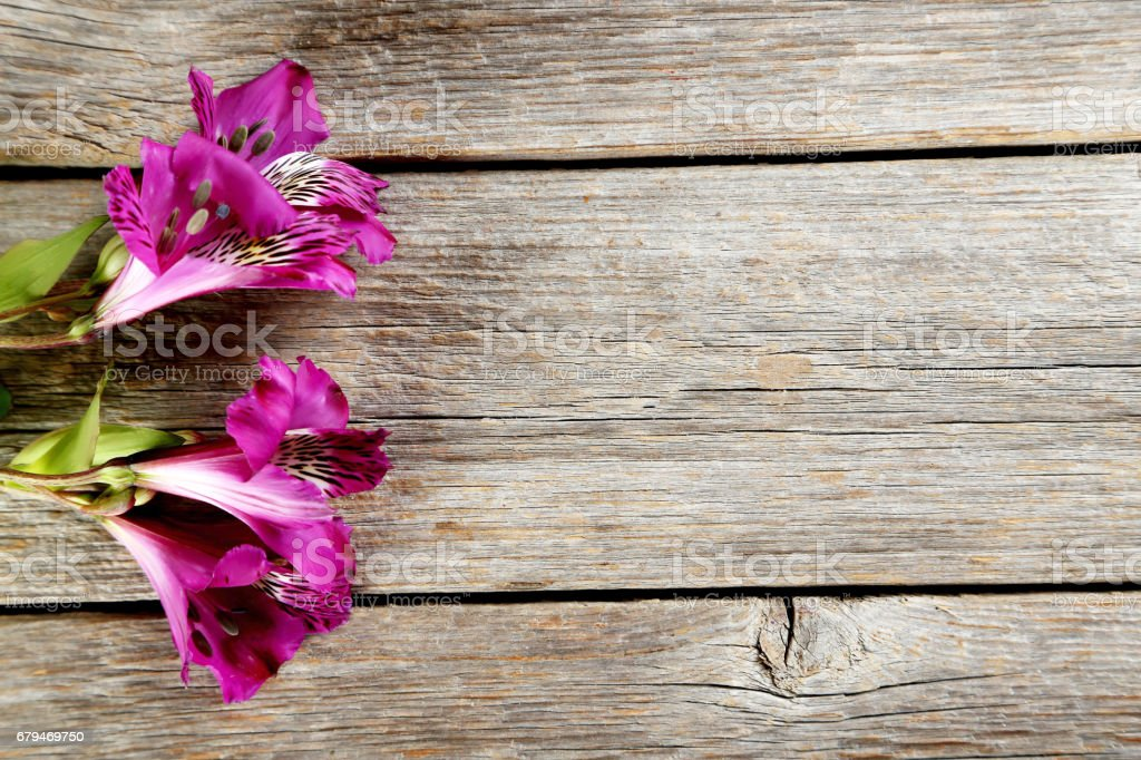 Beautiful alstroemeria flowers on a grey wooden table 免版稅 stock photo