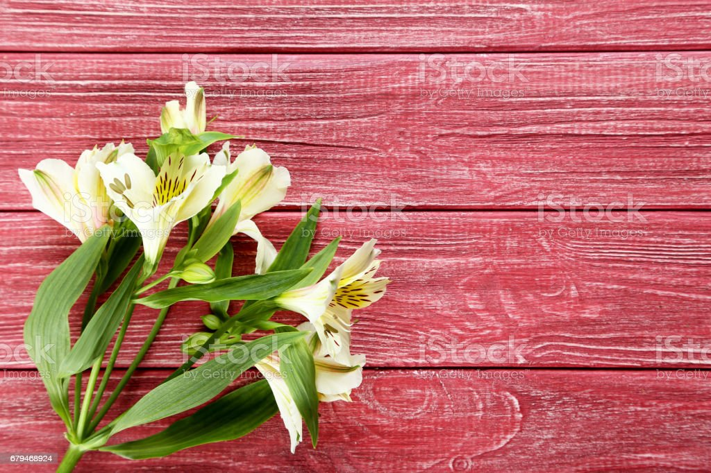 Beautiful alstroemeria flowers on a red wooden table royalty-free stock photo