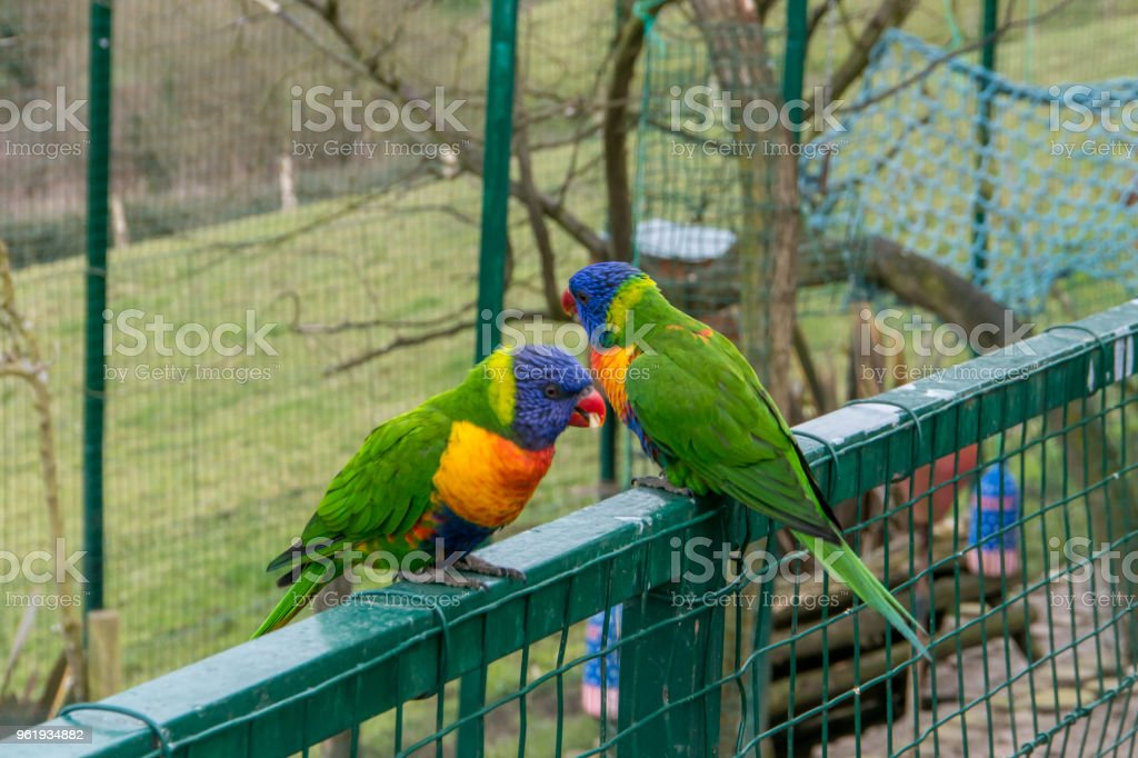 Beautiful and colorful tropical bird stock photo