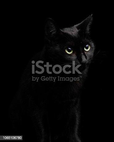 Studio shot of a black cat on black background