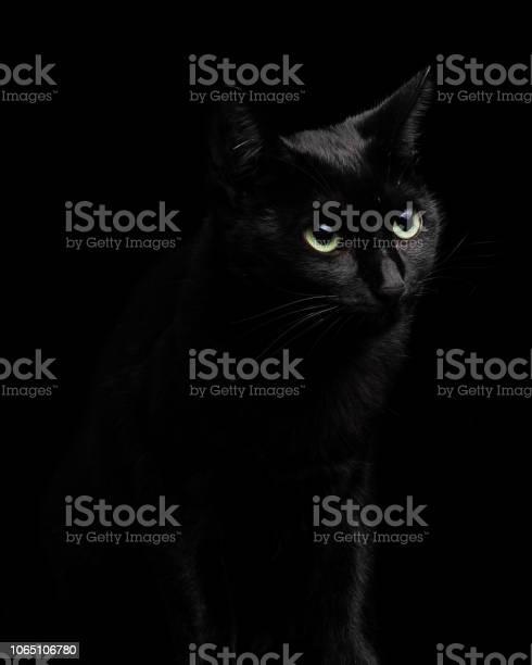 Beautiful and cute black cat isolated on black background closeup picture id1065106780?b=1&k=6&m=1065106780&s=612x612&h=rfxaj7id5q nm k7nydw42ymbc72tdw9lp4w2kemlye=