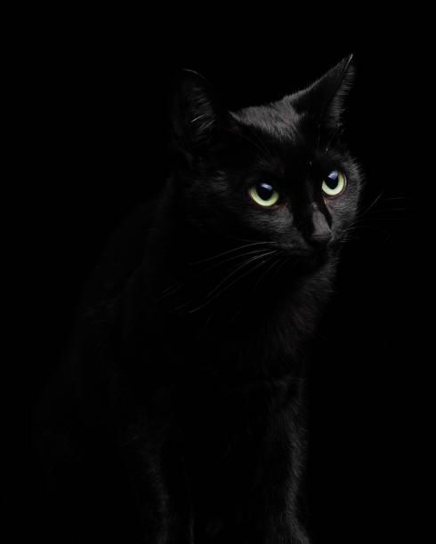 Beautiful and cute black cat isolated on black background closeup picture id1065106780?b=1&k=6&m=1065106780&s=612x612&w=0&h=rluatcqs9al 4szqcr 8v2msufnegxtz8ffcbd3fh3e=