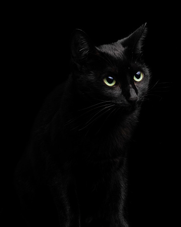 Beautiful And Cute Black Cat Isolated On Black Background Closeup Portrait Studio Shot Stock Photo Download Image Now Istock