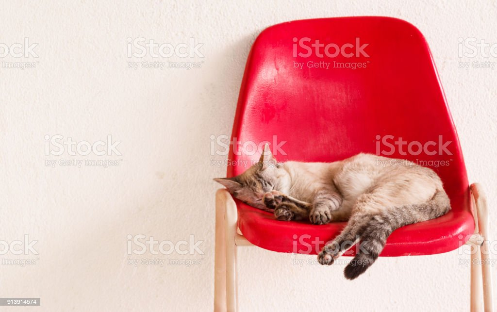 Beautiful And Cute Lazy Cat Sleeping On A Unique Red Chair Isolated
