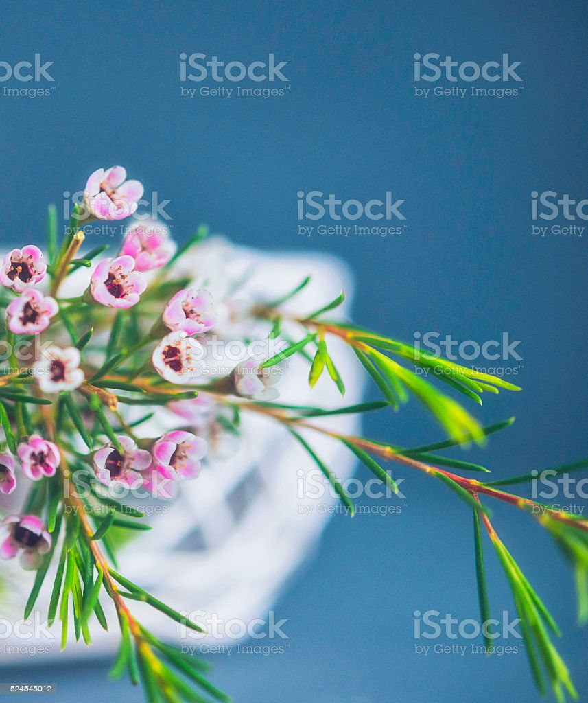 Beautiful And Delicate Waxflowers Arranged In Wire Basket Stock ...