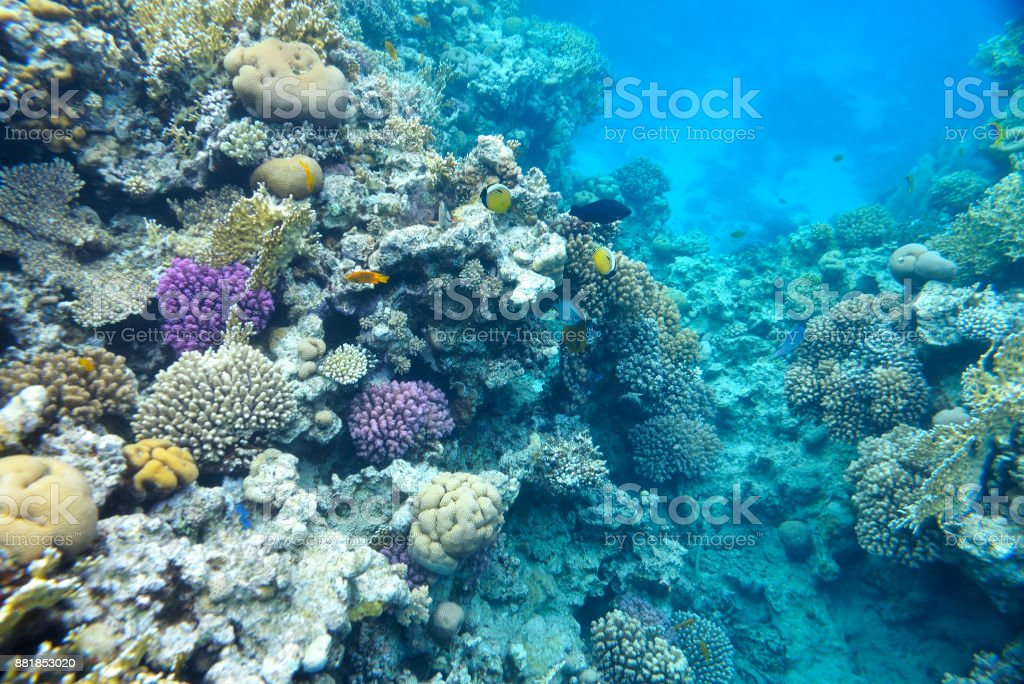 beautiful and diverse  coral reef stock photo