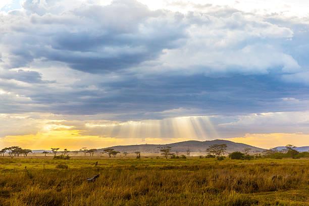 beautiful and dramatic african landscape - 平原 個照片及圖片檔