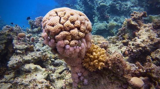 Beautiful And Healthy Tropical Coral Reef Brain Coral - Fotografie stock e altre immagini di Acqua