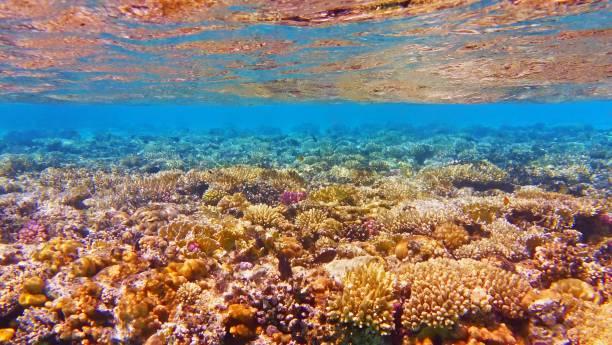 beautiful and healthy tropical coral reef - convenzione sulla diversità biologica foto e immagini stock