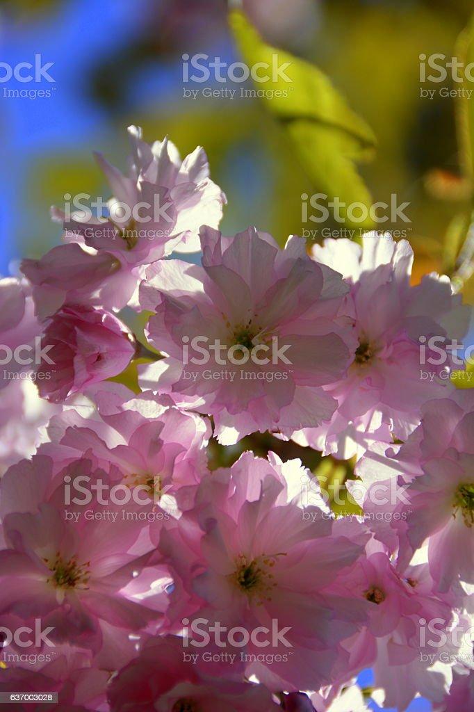 beautiful and unusual flowers стоковое фото