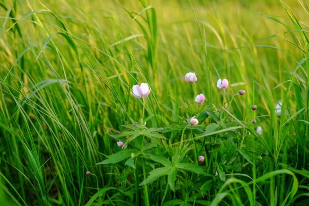 푸른 잔디 가운데 아름 답 고 특이 한 야생화 스톡 사진