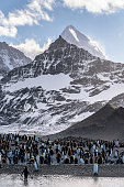 Majestic mountain peaks on South Georgia, large colony of King penguins with both adults and chicks on the beach, southern Atlantic Ocean