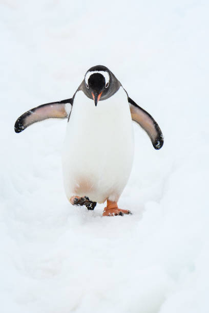 Beautiful Antarctic Wildlife
