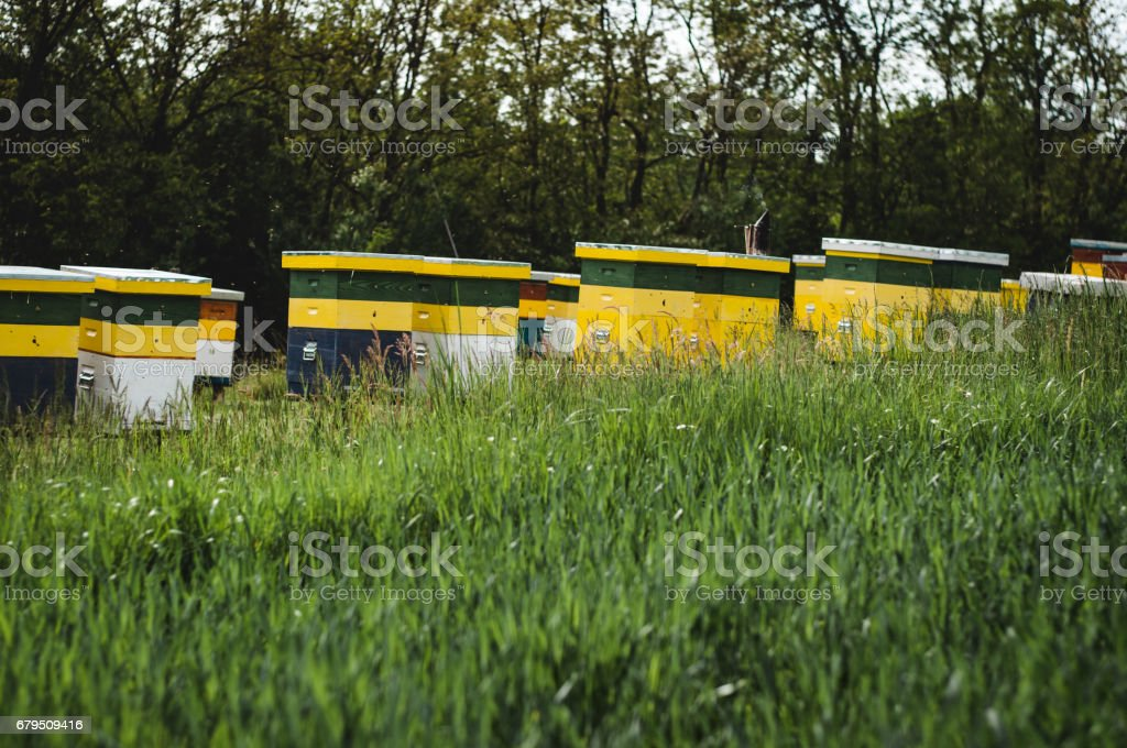 Beautiful apiary in the meadow royalty-free stock photo