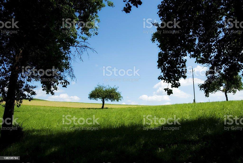 Beautiful apple tree an green meadow royalty-free stock photo