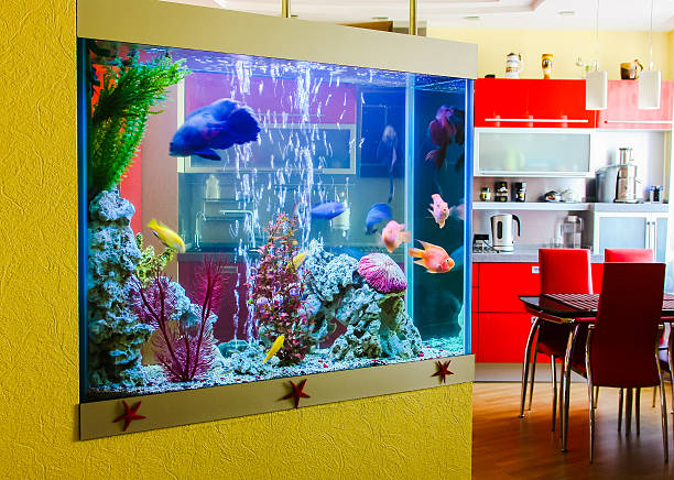 Beautiful aquarium with  fish in a room to modern apartment Beautiful aquarium with colorful fish in a room to modern apartment aquarium stock pictures, royalty-free photos & images