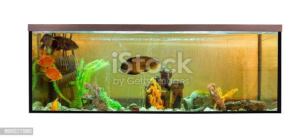 istock Beautiful aquarium with jellyfish and astronotus (Astronotus ocellatus) 895027580