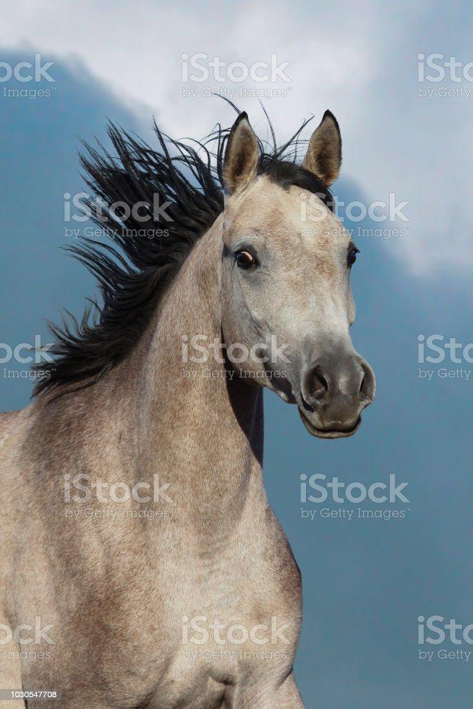 Beautiful Arabian Horse Portrait Stock Photo Download Image Now Istock