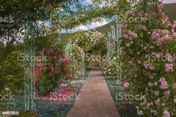 Beautiful arch with roses in the romantic garden picture id958676870?b=1&k=6&m=958676870&s=612x612&h=6d7g3bclcnevlgp83ia 7yqlvp1t73pbpu9 srt kjs=