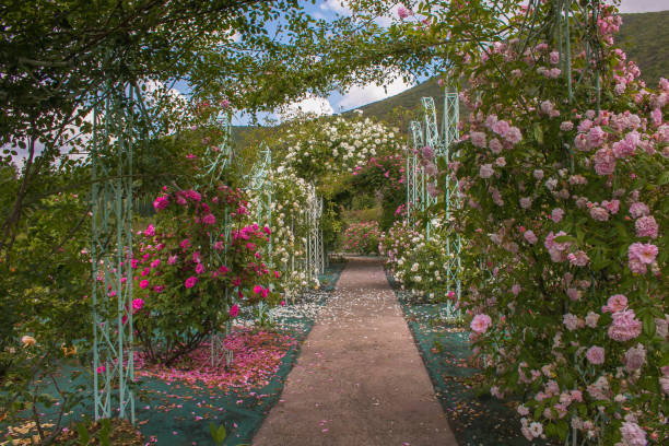 schönen bogen mit rosen im romantischen garten - der geheime garten stock-fotos und bilder
