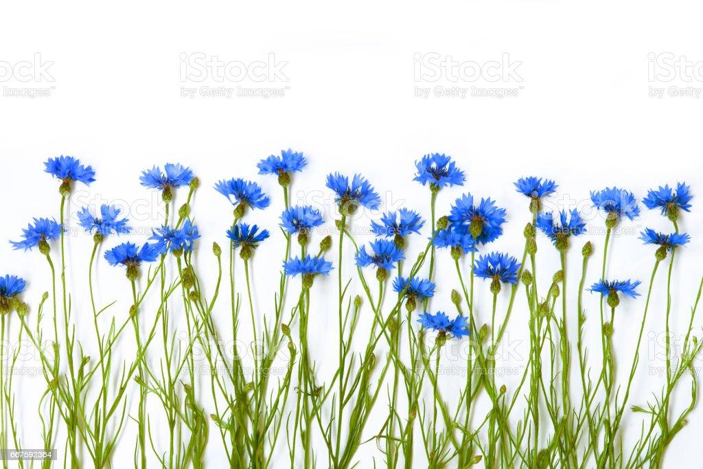 Beautiful Arrangement of Blue Cornflower. stock photo