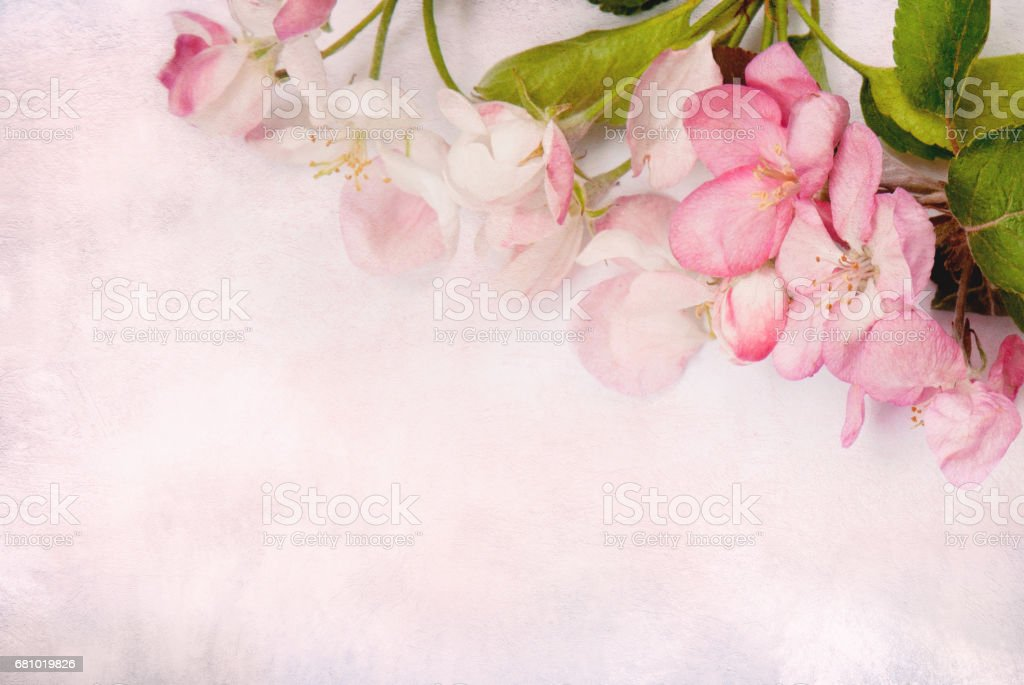 Beautiful Art stylized Card with pink Apple flowers. royalty-free stock photo