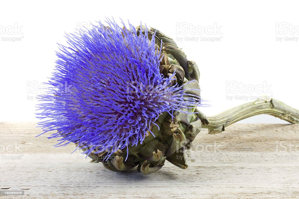 beautiful artichoke flower royalty-free stock photo