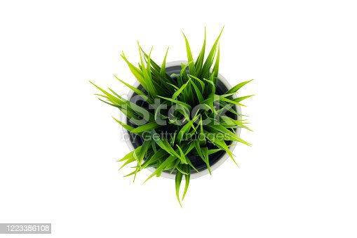 Beautiful artificial green grass in pots ceramic isolated on white background, plastic tree and foliage, plant mini tree, leaf fake with imitation for decorate home, closeup object.