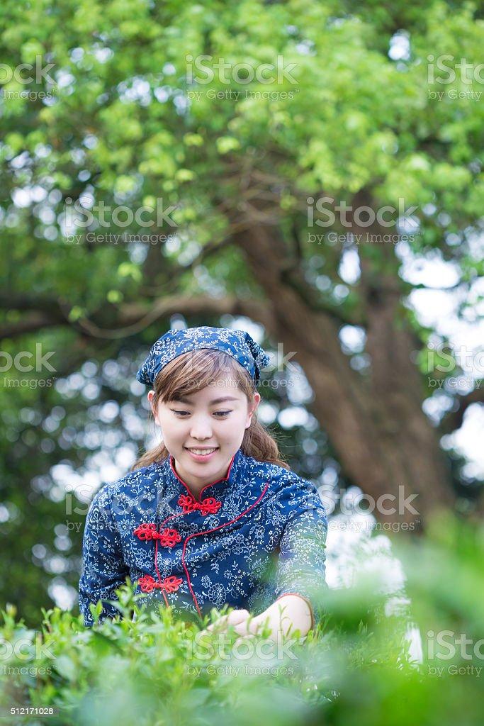 beautiful Asian girl works in green tea plantation
