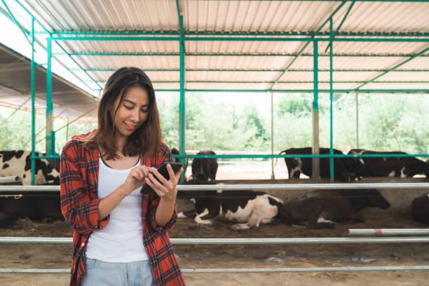 Schöne asiatische Frau oder Landwirt mit Handy oder Smartphone-App mit und Kühe in Kuhstall auf Milchbaum-Farbierung, und Tierhaltung Konzept. – Foto