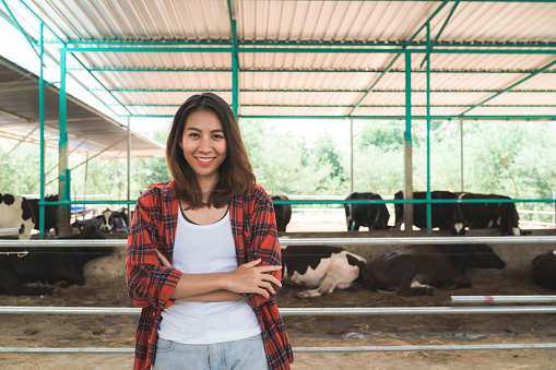 istock Beautiful asian woman or farmer with and cows in cowshed on dairy farm-Farming, and animal husbandry concept. 1138730574