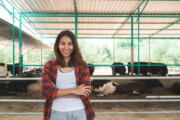 Schöne asiatische Frau oder Landwirt mit und Kühe in Kuhstall auf Milchvieh-Farbierung, und Tierhaltung Konzept. – Foto