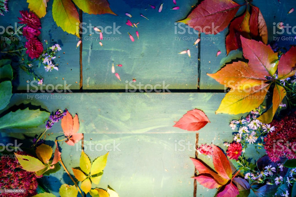 Beautiful Autumn and Fall colorful flat lay background with room for copy product or text writing  seasonal flowers and leaves changing color on rustic wood stock photo