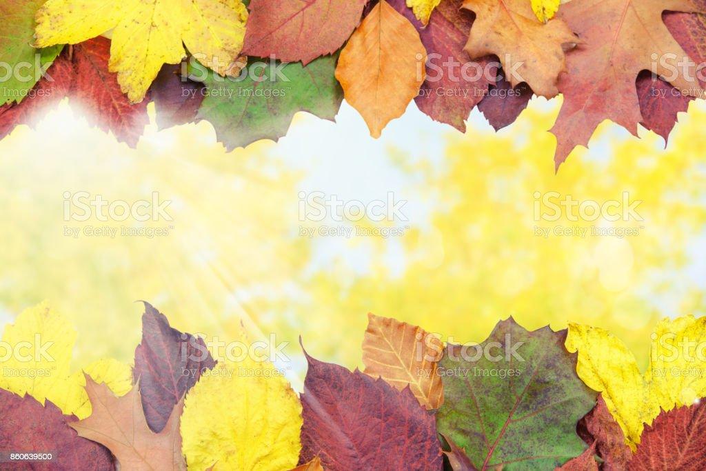 Beautiful autumn background stock photo