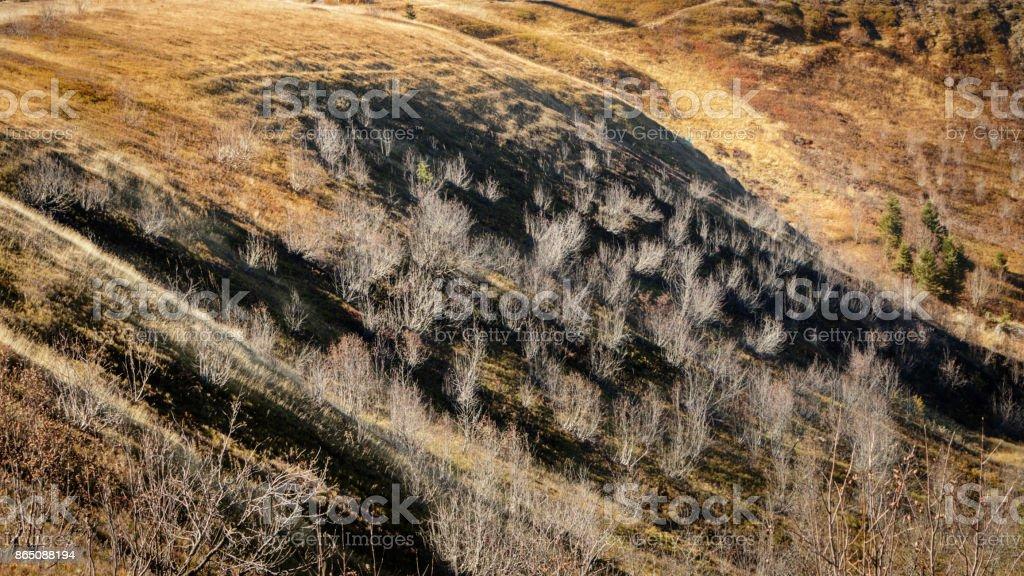 Beautiful autumn colored Feldberg stock photo
