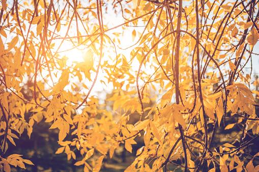 1038696838 istock photo Beautiful autumn day 1163936831