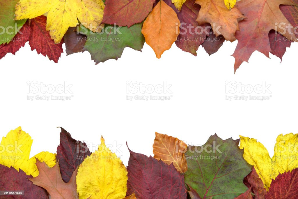 Beautiful autumn decoration stock photo