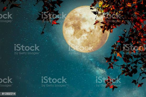 Photo of Beautiful autumn fantasy