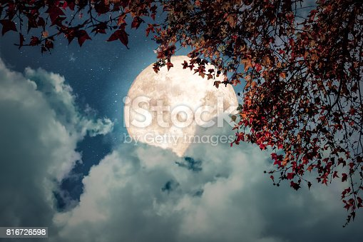 Beautiful autumn fantasy - maple tree in fall season and full moon with cloud, star in night skies background. Retro style artwork with vintage color tone