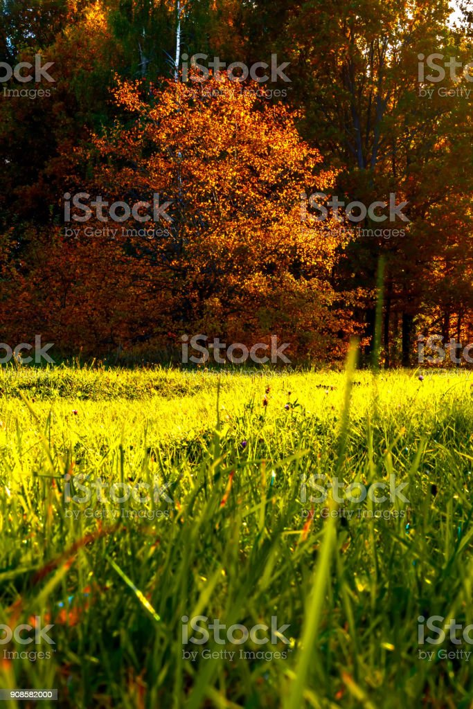 Beautiful autumn forest Landscape in Lithuania. View to green meadow with bright and colorful forest trees on blue sky background. The sun's rays penetrate through the trees stock photo