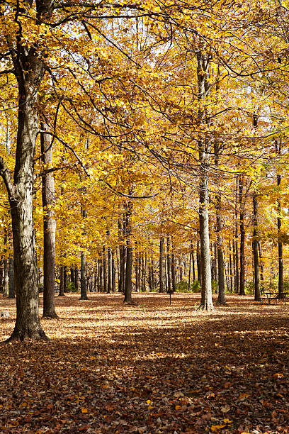 Beautiful Autumn Forest stock photo