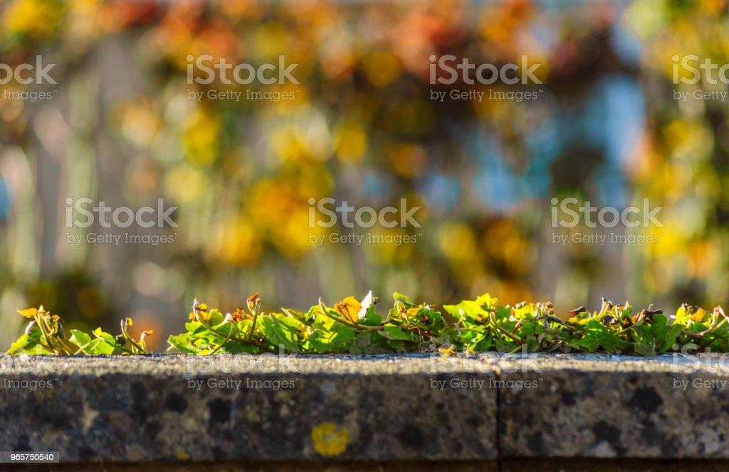 Mooie herfst frame - naturak landschap - Royalty-free Bakstenen muur Stockfoto
