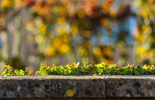 Mooie Herfst Frame Naturak Landschap Stockfoto en meer beelden van Bakstenen muur