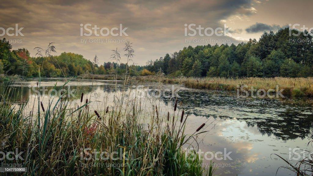 bela paisagem de outono. Uma vista pitoresca de um lago pantanoso através de juncos costeiros em primeiro plano em tempo nublado - foto de acervo